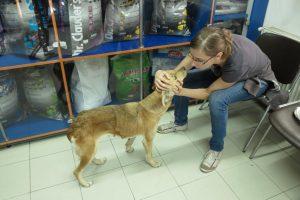 Irina rassure Mara chez le vétérinaire (Bucarest)