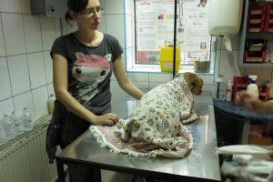 Mara chez le vétérinaire (avec Irina)