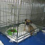 Betty (12) chez le vétérinaire (4 décembre 2012)