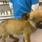 Betty (6) chez le vétérinaire (27 novembre 2012)
