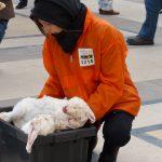 Happening L214 contre la maltraitance des lapins