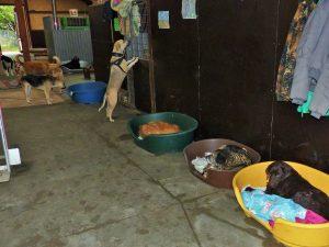 Refuge Sans Famille (29 octobre 2014)